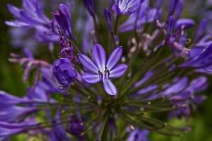 Weiß einer wie die Blume heißt?